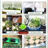 Загальні правила посадки та вирощування розсади для подальшої висадки в грунт