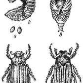 Основні відомості про розвиток шкідників і хвороб