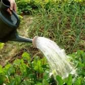 Правила ефективного поливу