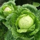 Рецепти страв з капусти