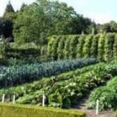 Ущільнені посіви овочів