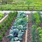 Варіанти посівів змішаних і ущільнених городніх культур