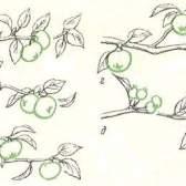 Закономірності плодоношення плодових дерев