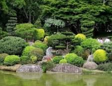 Хвойні композиції в ландшафтному дизайні. Вибираємо рослини!