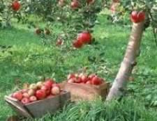 Яблуні та груші - велике розмаїття сортів, як бути?