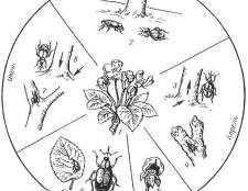 Як боротися з личинками пильщика, мідяниця, попелиць