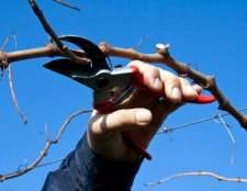 Як обрізати виноград на зиму