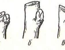 Як правильно вкорочувати і вирізати гілки