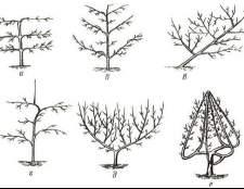 Як сформувати пальметто