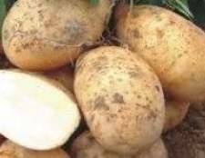 Як вибрати картопля для посадки