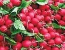 Як вирощувати насіння редиски і дайкона правильно