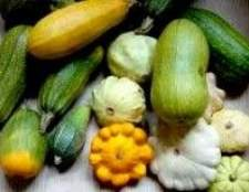 Як вирощувати гарбуз, кабачки і патисони