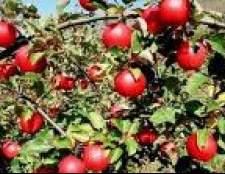 Як захистити сади без пестицидів в казахстані