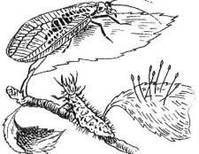 Корисні комахи і мікроорганізми для саду