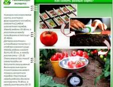 Посадка і вирощування помідорів в теплиці: огляд технології від а до я