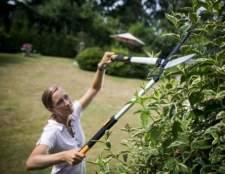 Сучкорез садовий