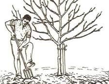 Догляд за молодим садом