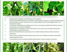 Вибираємо кращі сорти огірків для посадки в теплицю з полікарбонату